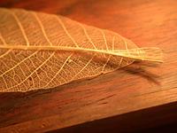 Chinese leaf 2