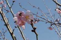 Just Flowers II