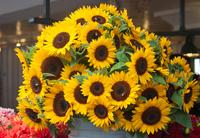 Market Sunflowers