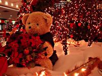 Bear of Christmas / Urso de Na