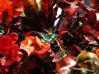 butterfly conservatory 1