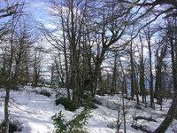 forest - Bariloche