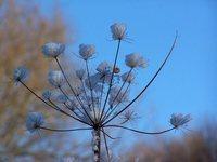 Winter plume 2