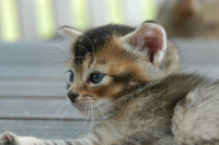 Cat story 5