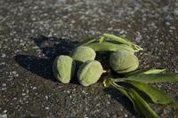 Almonds 3