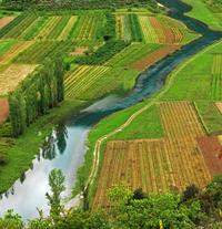 rich field