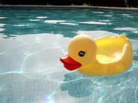 Duck Family 2