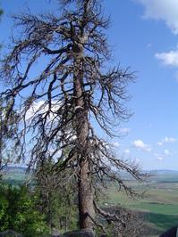 Kamiak Butte 2