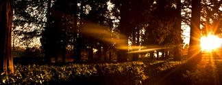 Orange Forest Sunrise flare