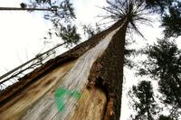 A way up the tree