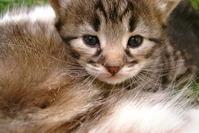 Tunita the kitty