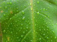 Drop in leaf