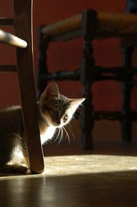 Cat story 8