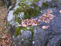 Rocks, moss, autumn leaves
