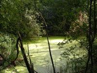 Green Pool - Higham Ferrers