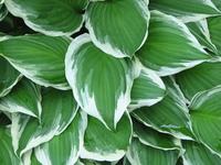 Leafy Plant Thing