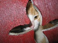 cat-fence