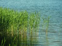 cane on the lake