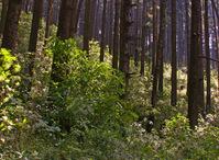 Timberland 4