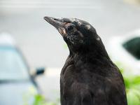 Bird on Windowsill