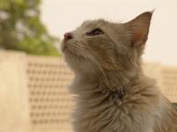 Cat Face 01