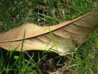 leaf&grass