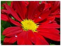 Flower Photo 4