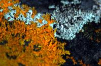 Fungus textures 4