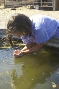 Girl at water trough