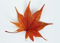 Leaf 145