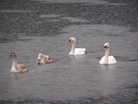 river birds 2