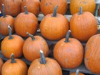 Pumpkins for Hallowe'en 3