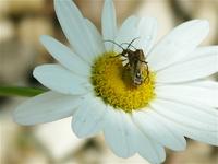 Bugs on Flower