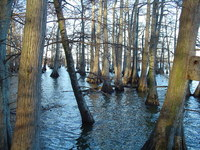 Lake trees 5