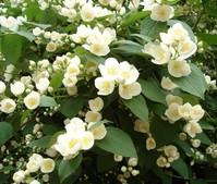 Flowering Spring