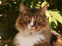 Cat in paris 2