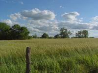 Rolling Kansas Prairie