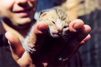 cat's baby