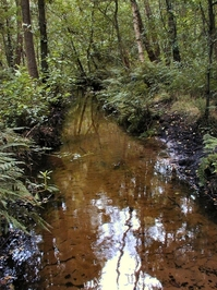 Pettypool Brook