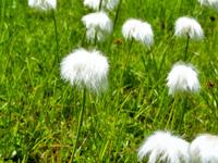 fleurs barbapapa 1