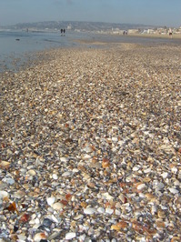 Sea Shells 12