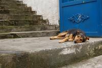 Dog and blue door