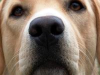 My dog 2