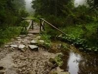 Little forest bridge
