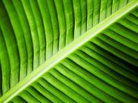 Green veins 2