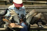 Boy feeding birds 2