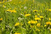 flower meadow in spring