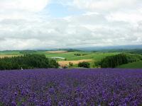 Hokkaido 31