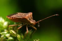 baby bug 3