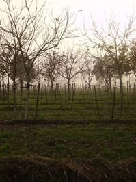 The Misty Fields